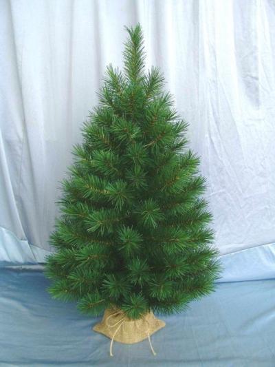 Vianočný stromček OREGON PINE