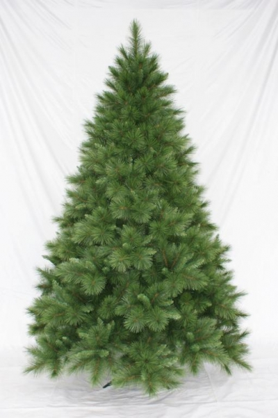 Vianočný stromček LONGNEEDLE PINE